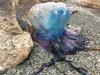 Beachgurl322-03-05-17